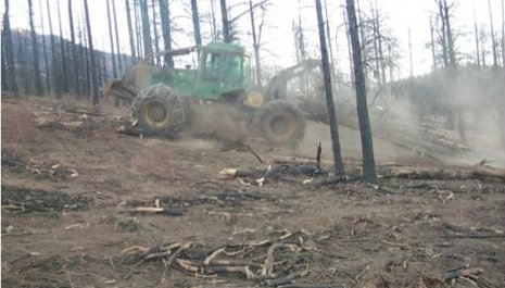 A skidder picks up cut trees and drags them downhill.