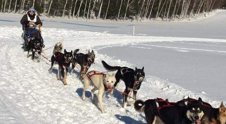 Huskies Mush: First-of-its-kind Club is Ready to Race