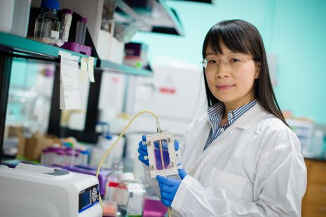 Feng Zhao works on regenerative tissue development; she recently won the Biomedical Engineering Society's Rising Star Award.