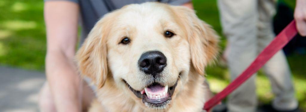 Pre-Veterinary Medicine Preparation | Pre-Health Professions