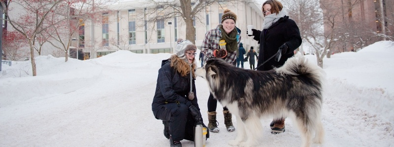 A husky dog greets a student on campus during Winter Carnival