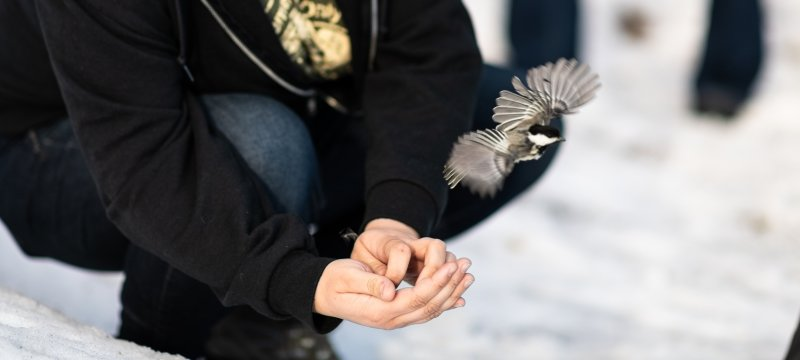 Researcher kneeling while bird flies from hand.