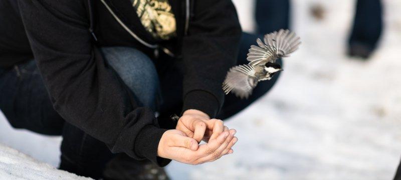 Researcher kneeling while bird flies from hand.