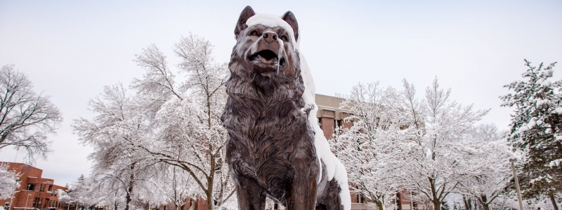 Husky statue, by award-winning sculptor Brian Hanlon, in winter with snow.