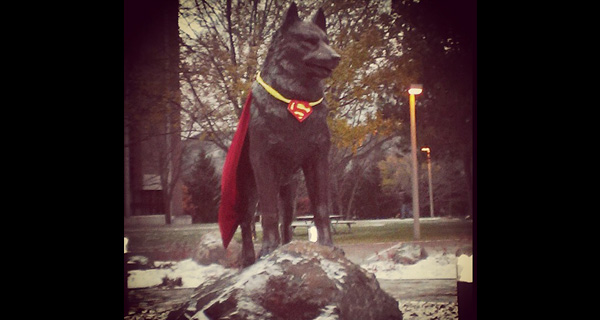 superman-husky-statue