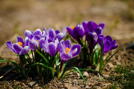 44.70162.512.flowers 201604140005