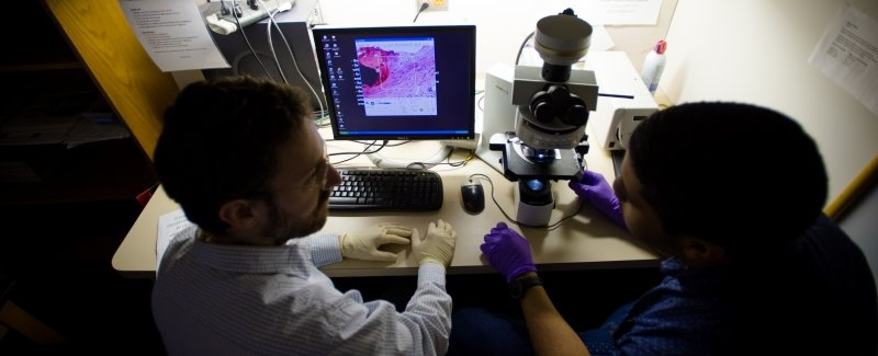 Researchers at a desk discuss an image displayed on the computer from a microscope.