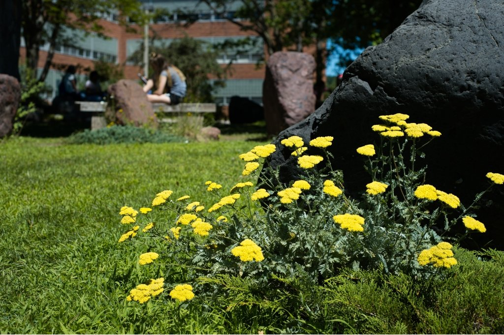 A young female in the background sitting on a bench with her leg up and yellow flowers and black rock with four other boulders in a shaded tree area with grass outside on a college campus