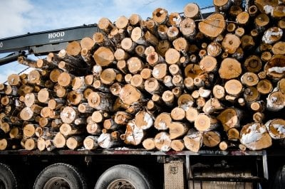 logging truck packed with aspen logs