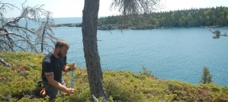 A man with a tattoo around his bicep kneels in juniper coring a tree with a rodlike       instrument with Lake Superior and another Isle Royale island in the background in       the summer.