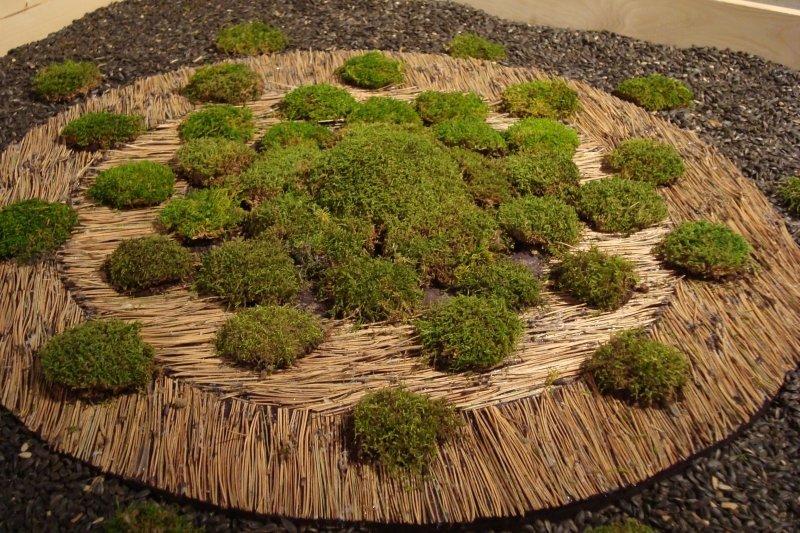 Moss art project